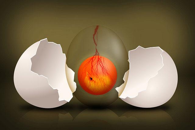 cangkang telur pecah