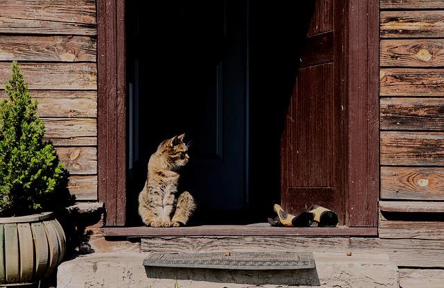 kucing di rumah