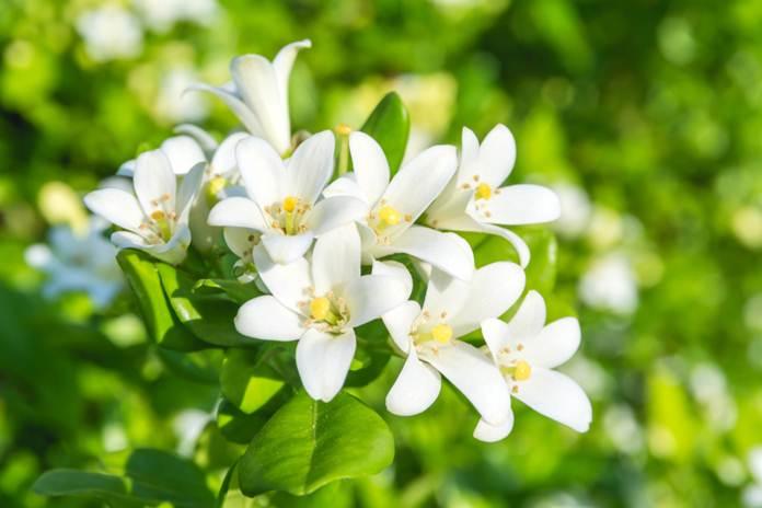 nama nama bunga