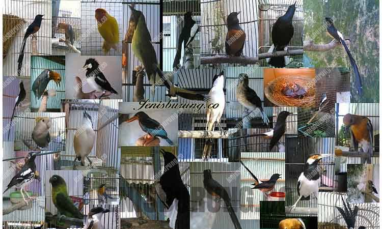 Daftar Burung Yang Dilindungi Terbaru
