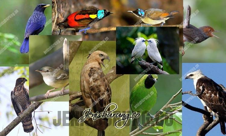 burung endemik indonesia, daftar burung indonesia, jenis burung indonesia, burung dilindungi, jenis burung kicau indonesia, jenis burung terancam punah