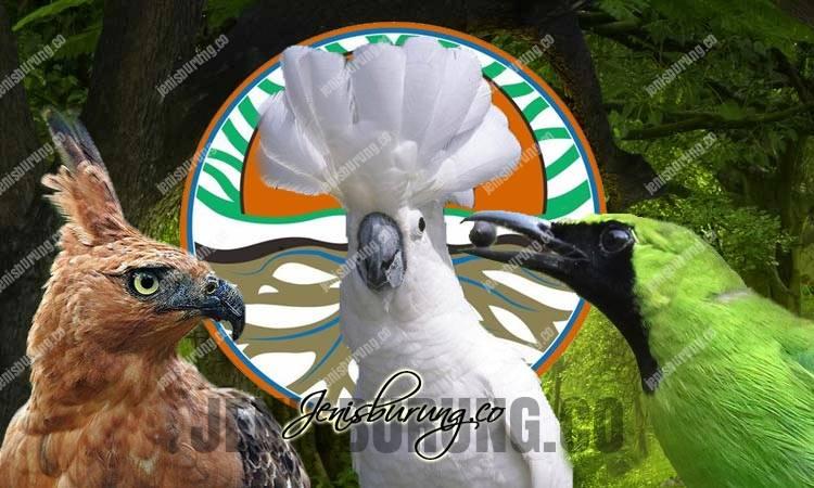 cara mendaftarkan burung dilindungi ke bksda, daftar burung online bksda, izin penangkaran burung dilindungi, izin memelihara burung dilindungi, daftar burung dilindungi online