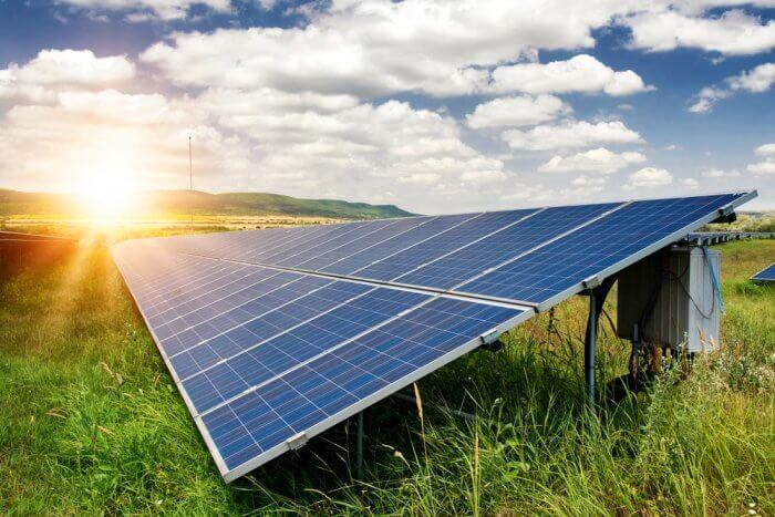 manfaat energi matahari bagi hewan