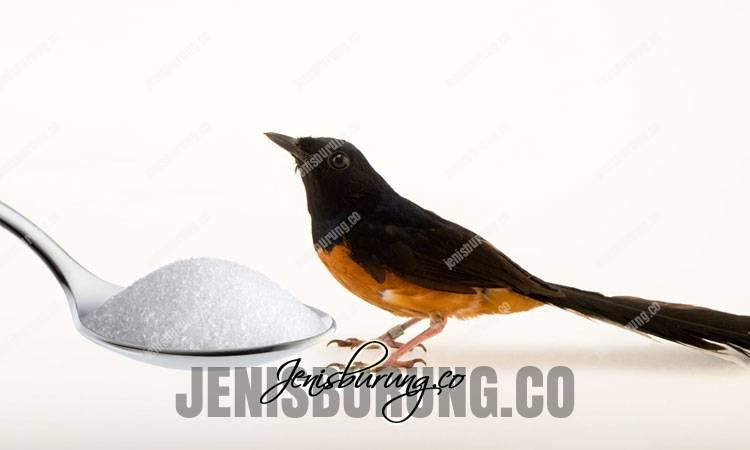 manfaat garam, manfaat air garam, air garam untuk burung, manfaat garam untuk murai batu, cara memberikan garam pada burung, takaran garam untuk burung, dampak negatif garam pada burung