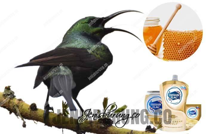 racikan pakan kolibri agar cepat gacor