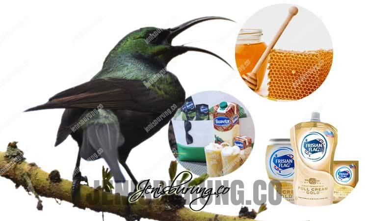 racikan pakan kolibri agar rajin bunyi