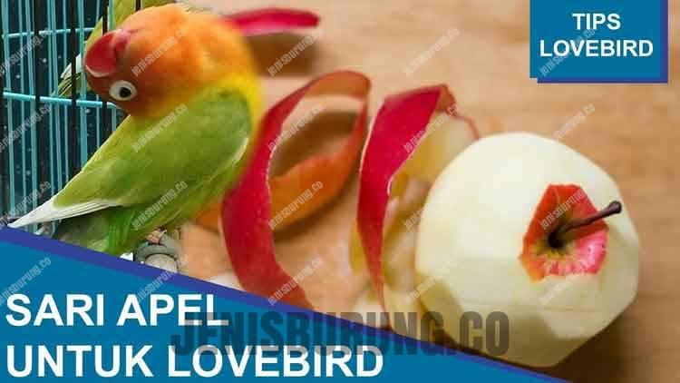 Ramuan Sari Apel Untuk Lovebird Moncer di Lapangan