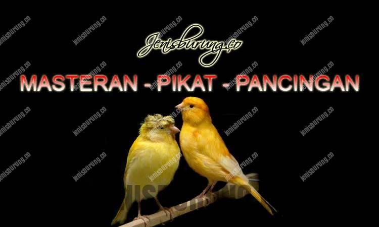 suara burung kenari loper gacor dan ngeplong, download suara kenari gacor ngeplong full isian, suara kenari gacor full isian durasi panjang