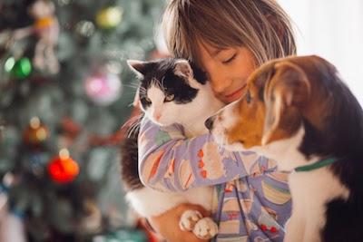 bagaimana cara merawat hewan peliharaan