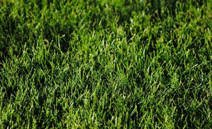 Tips menghilangkan rumput liar