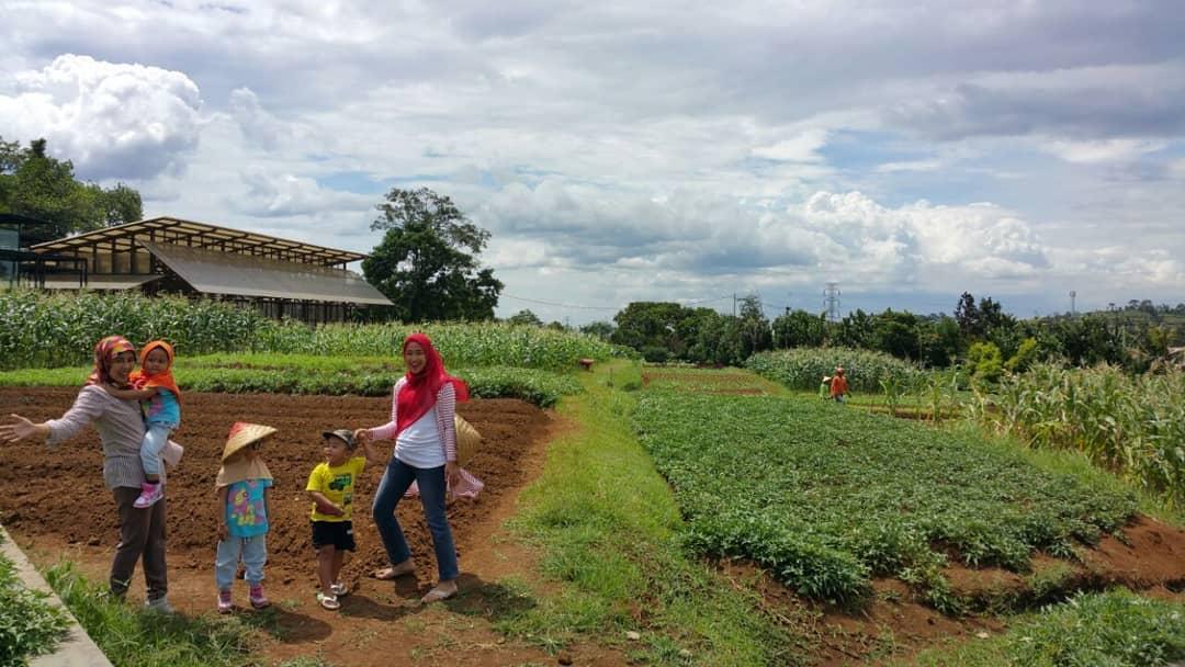 area kebun di kuntum farm field