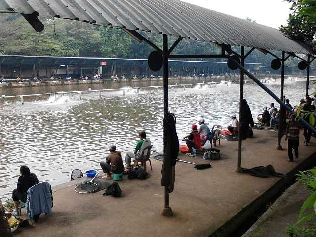 area pemancingan ikan di telaga arwana cibubur