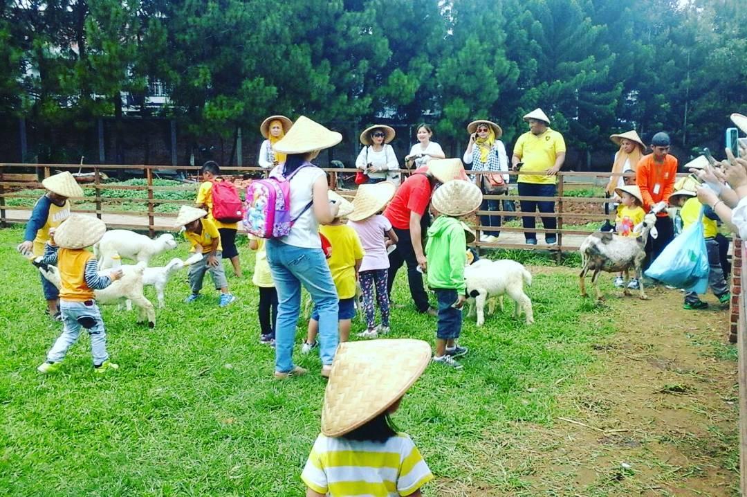 area ternak kambing di kuntum farm field