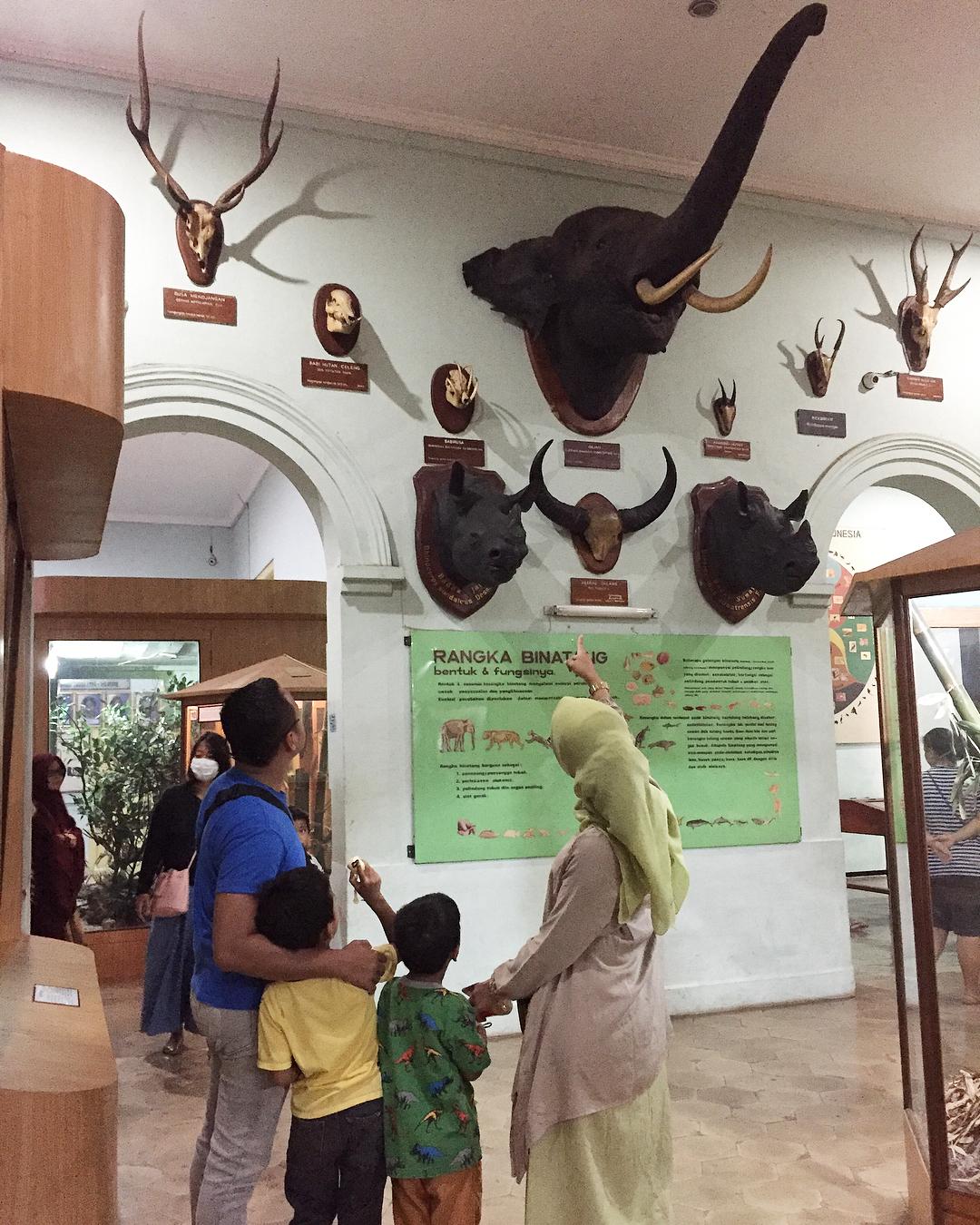 asyiknya liburan bersama keluarga di museum zoologi bogor