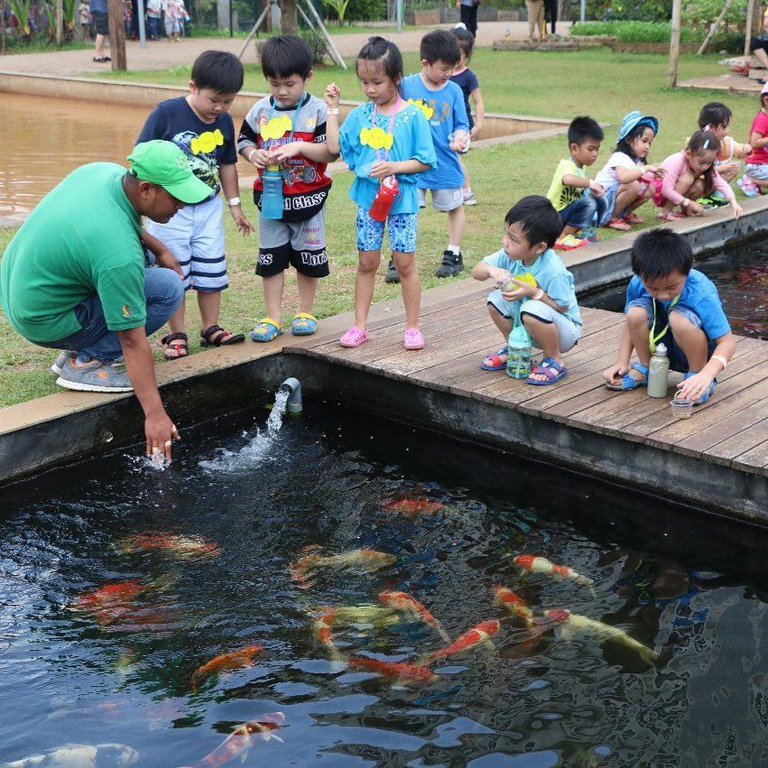 asyiknya memberi makan ikan-ikan di scientia square park serpong tangerang