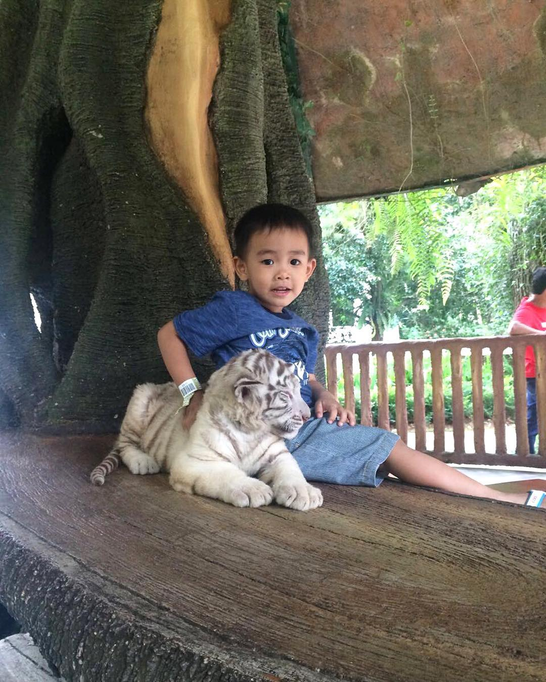 foto bersama anak harimau di taman safari cisarua bogor