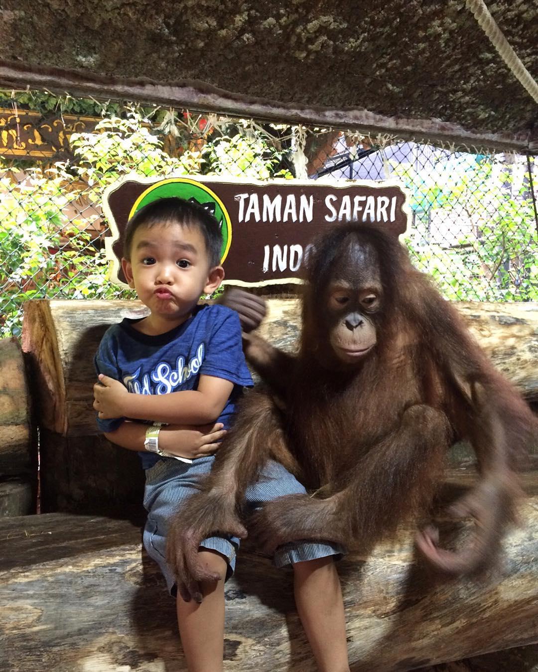 foto bersama orang utan di taman safari cisarua bogor