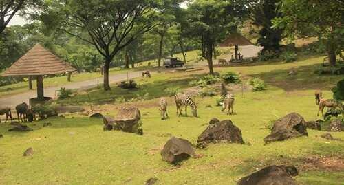 indonesia safari park 2 prigen