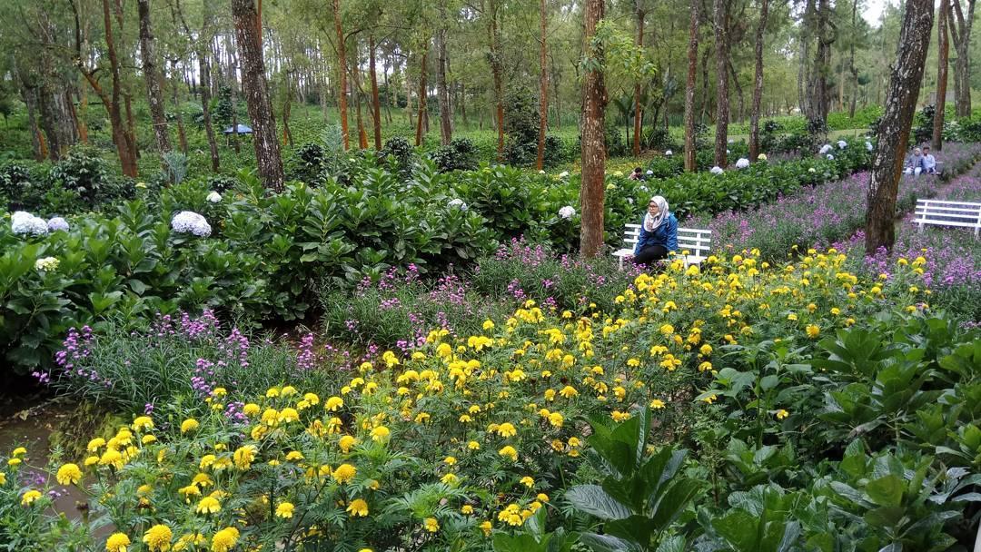 kebun bunga yang cantik di coban talun