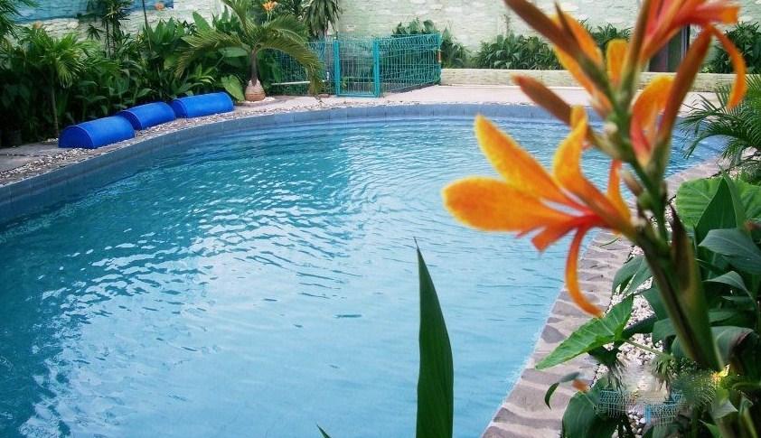 kolam renang sarang walet