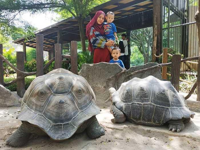 kura-kura aldabra di fauna land ancol