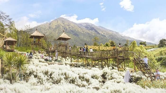landscape taman edelweiss karangasem dengan latar belakang pegunungan