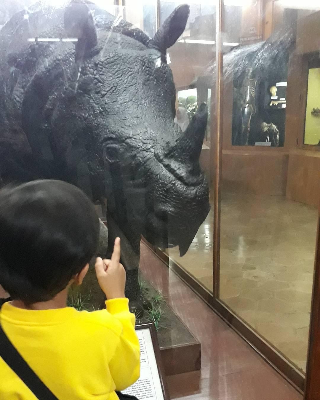 melihat kerangka badak di museum zoologi bogor