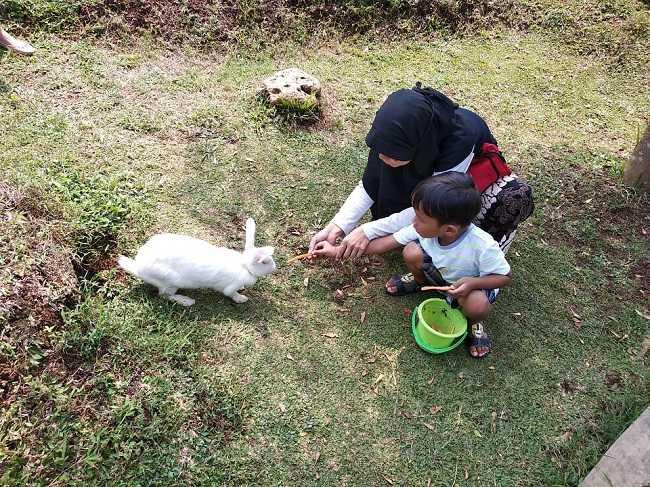 memberi makan kelinci di d kandang amazing farm