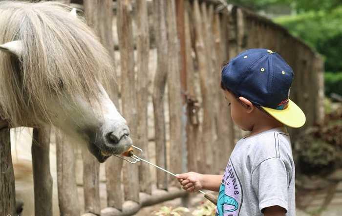memberi makan kuda di fauna land ancol