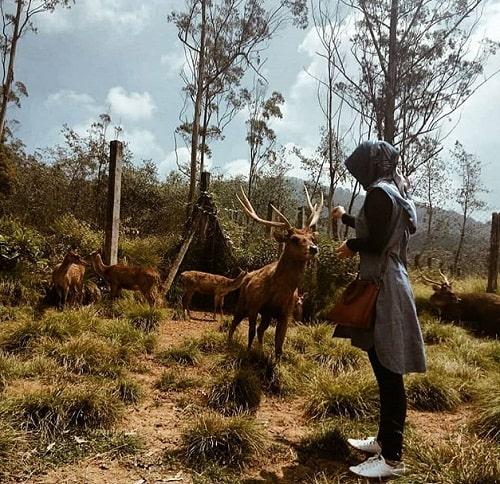 memberi makan rusa di bukit waruwangi serang banten