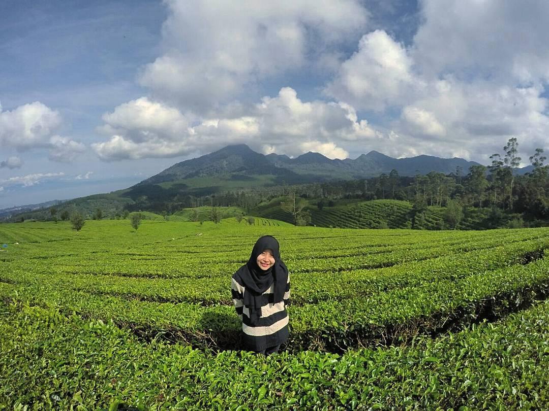panorama kebun teh sukawana