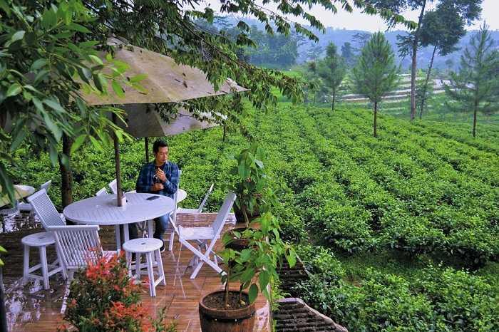 panorama sekitar dnoro donker tea house