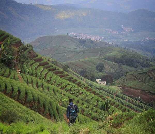 panorama terasering panyaweuyan majalengka