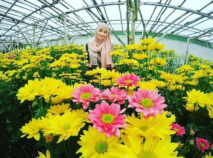 pesona keindahan setiya aji flower farm