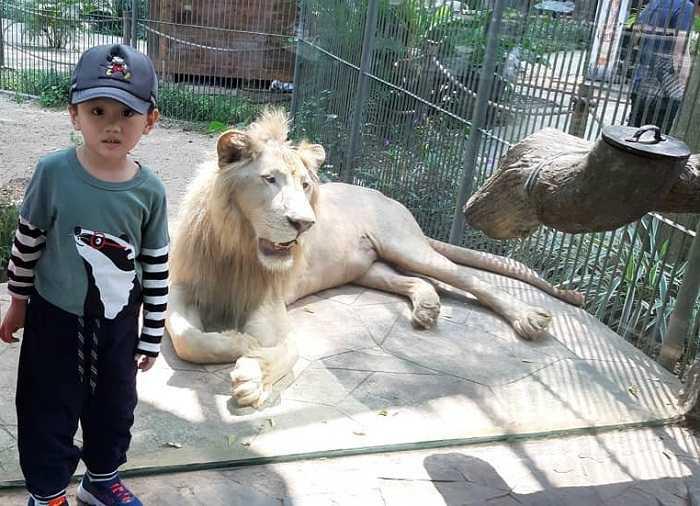 singa putih di fauna land ancol