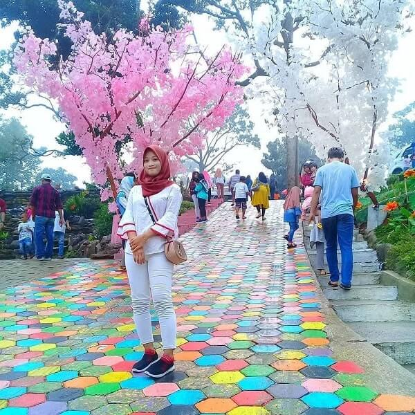 spot foto bunga sakura dan jalan warna-warni di the hills vaganza