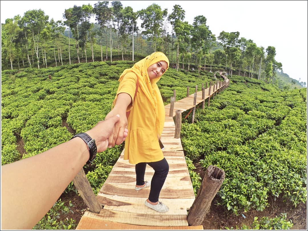 spot foto kebun teh gunung gambir jember