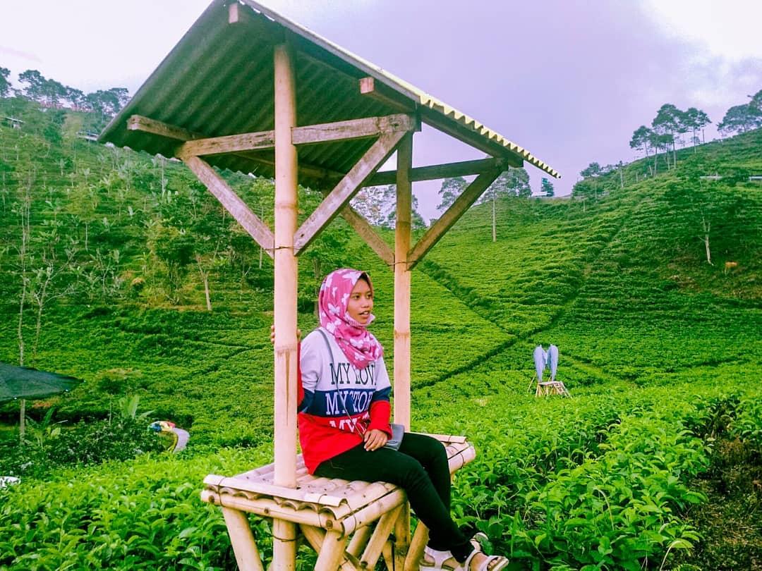 spot foto saung bambu di kebun teh kemuning