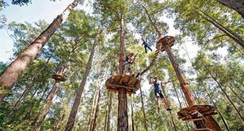 tretes treetop adventure park