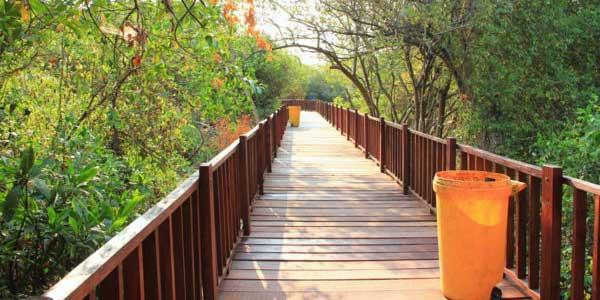 Taman Mangrove Wonorejo