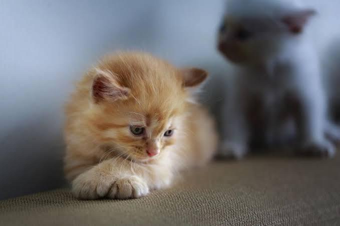 Puisi kucing Sedih
