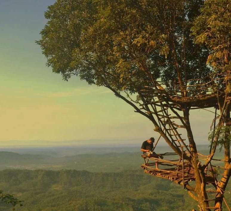 Gambar-Rumah-Pohon-Igir-Wringin