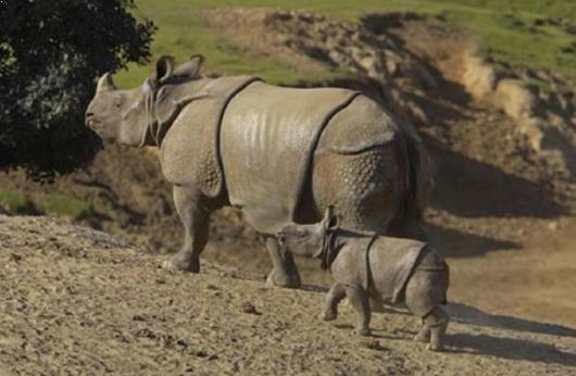 Gambar Taman Nasional Ujung Kulon