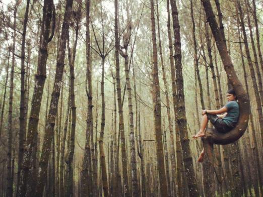 Hutan Pinus Kayon Semarang