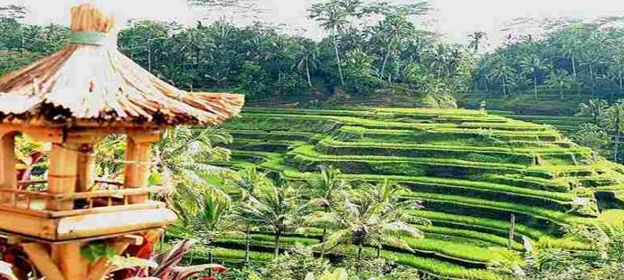 Wisata Alam Ubud Bali