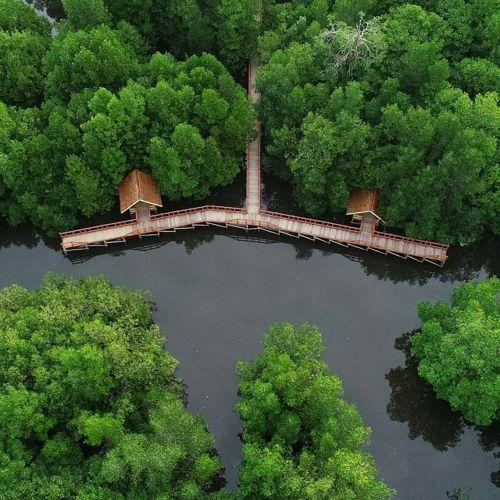 Wisata Hutan Mangrove Jogja