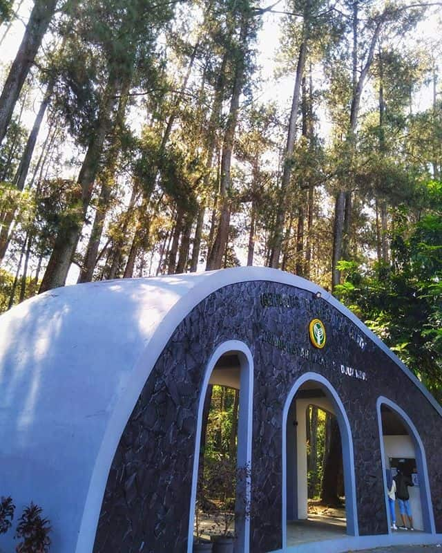 tempat wisata romantis bandung taman hutan raya