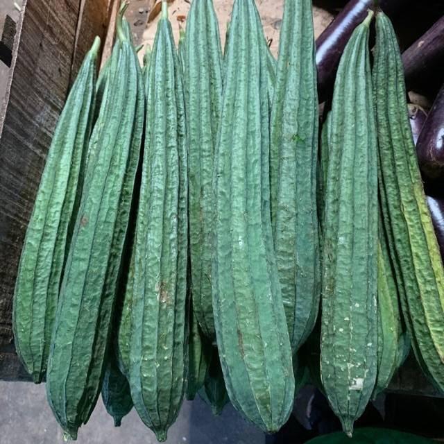 tanaman palawija