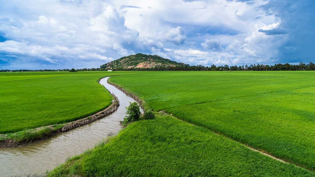 agriculture, irrigation, rice fields-6560523.jpg